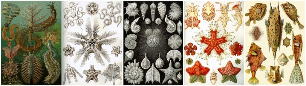 Ernst Haeckel illusztrációi