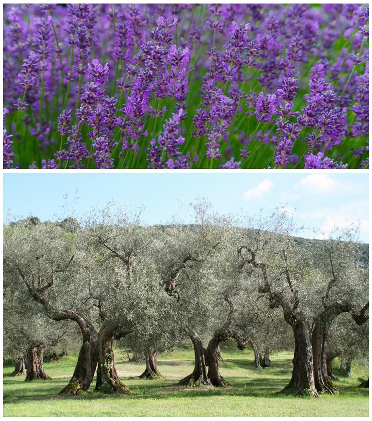 Levendula és olíva
