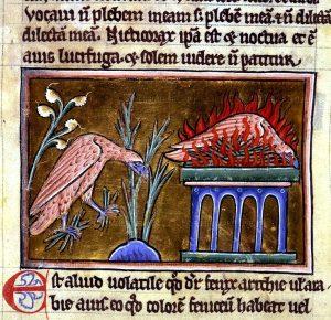 Főnix egy XII. századi kódexben
