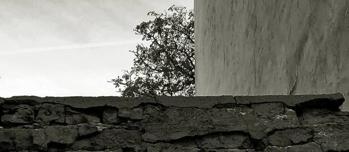 Köböl Vera: A fa